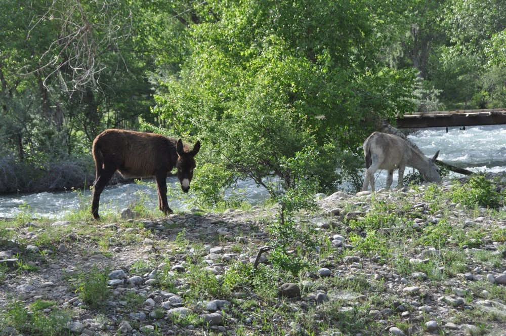 Esel am Flussufer