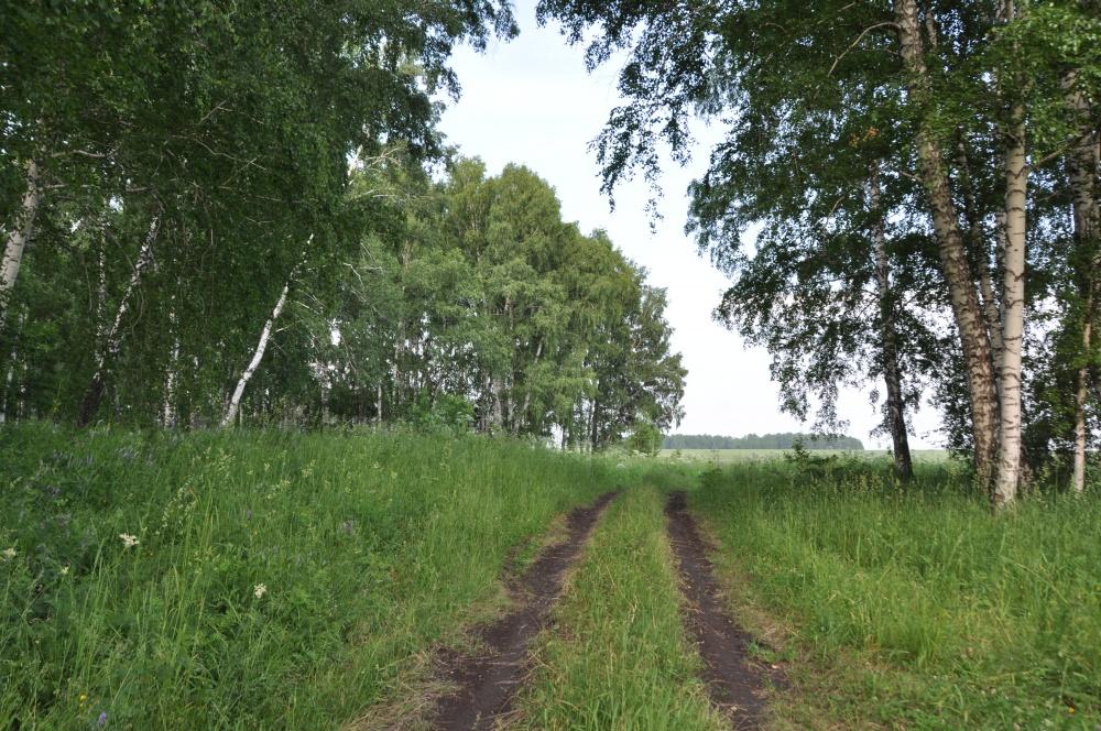 Fahrweg über Wiese
