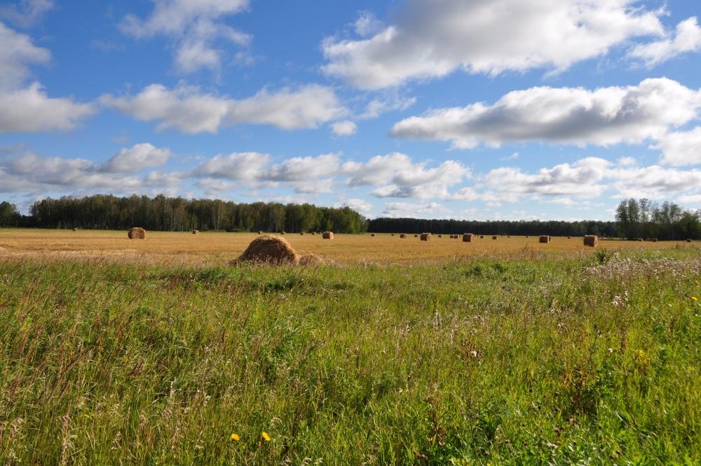 Herbstlandschaft mit Strohballen