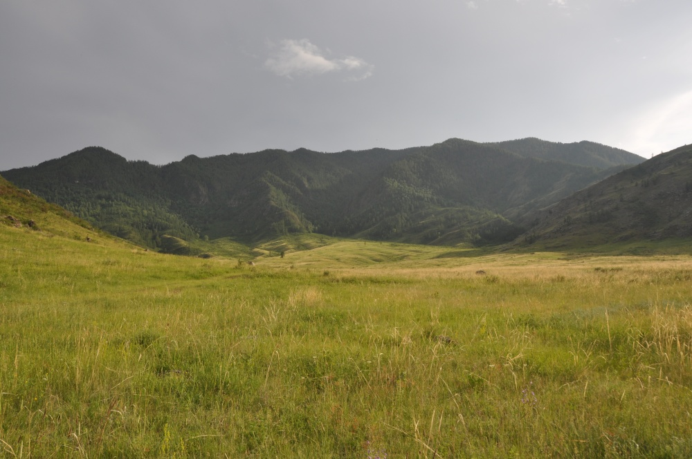 Hügelzug, Wiese im Altai