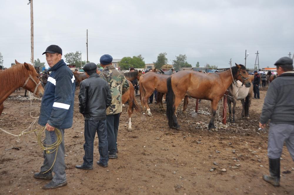 Männer begutachten Pferde