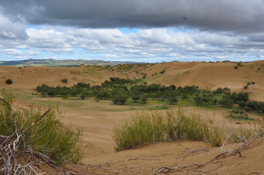 Oase zwischen den Mongol Els Dünen