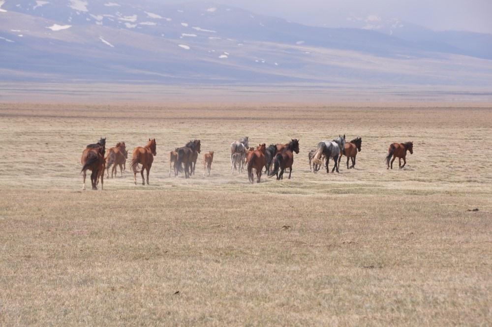 Rennende Pferdeherde auf Ebene