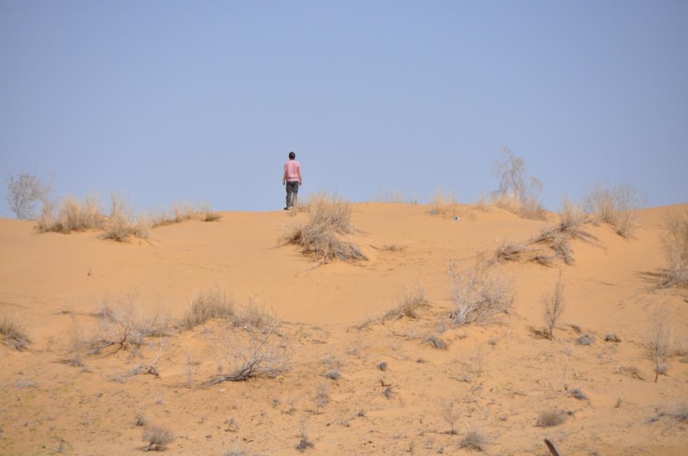 Tobi auf Düne in der Karakum Wüste