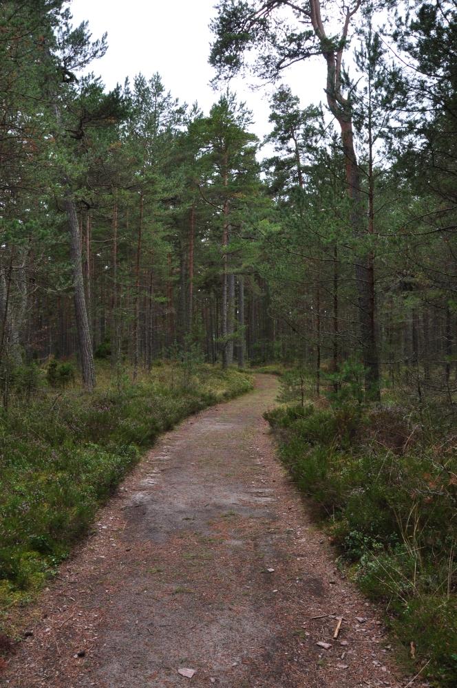 Wald in Lettland