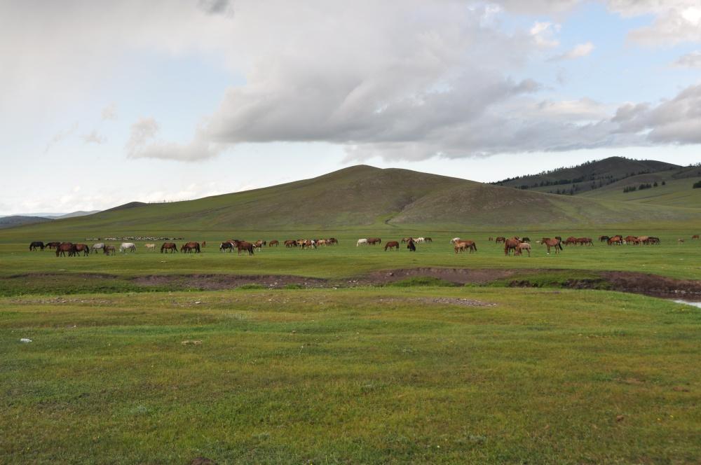 Weidene Pferde