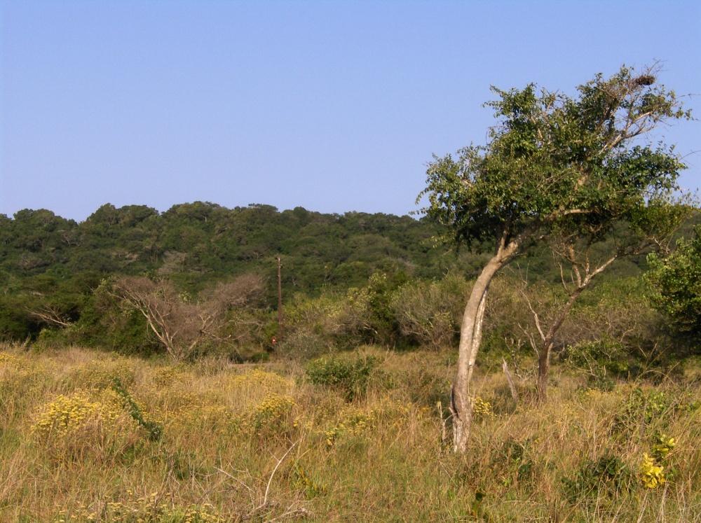 Bäume, Büsche im Feuchtgebiet