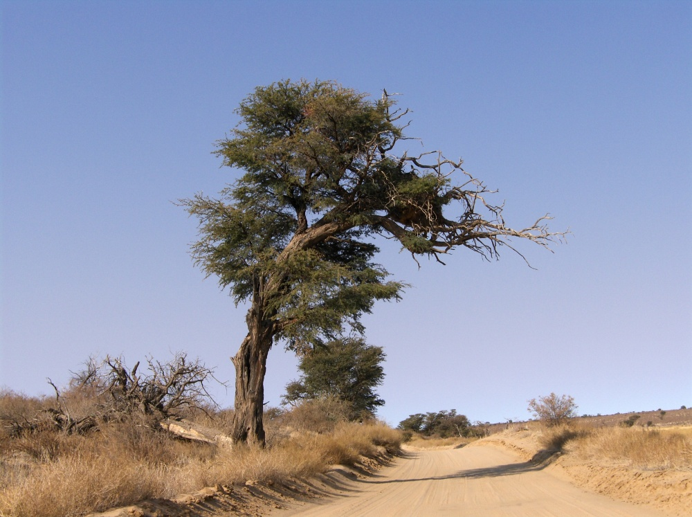 Baum neben sandiger Piste