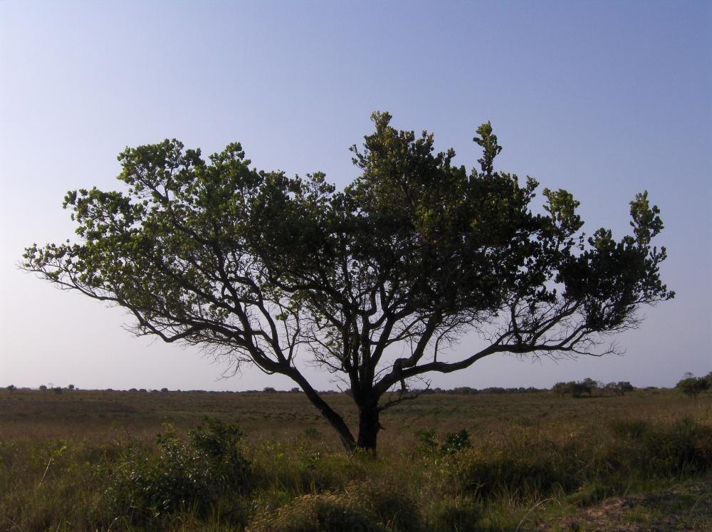 Hluhluwe-iMfolozi Nationalpark