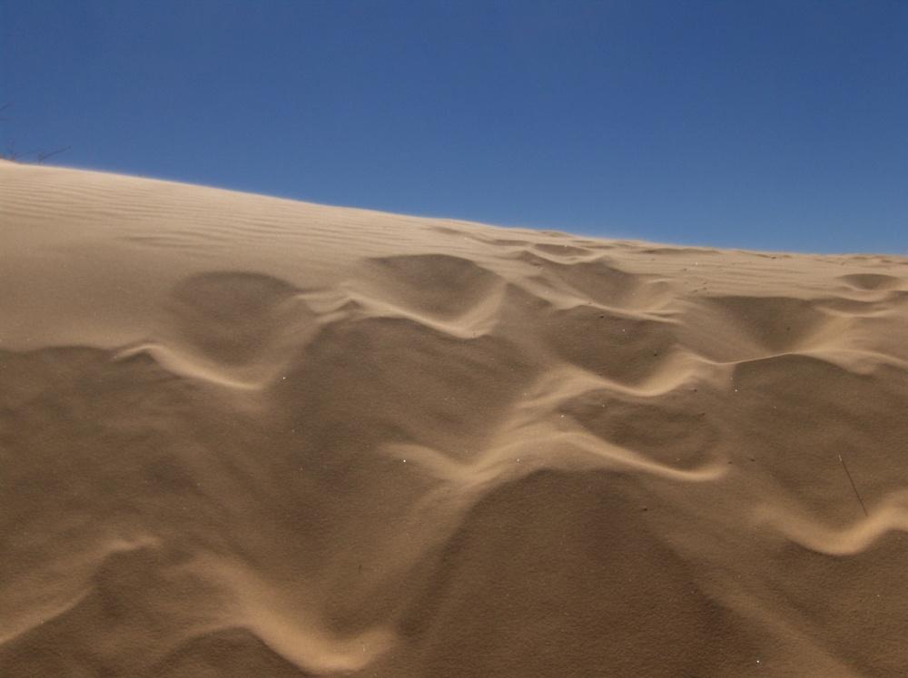 Muster auf weissen Dünen
