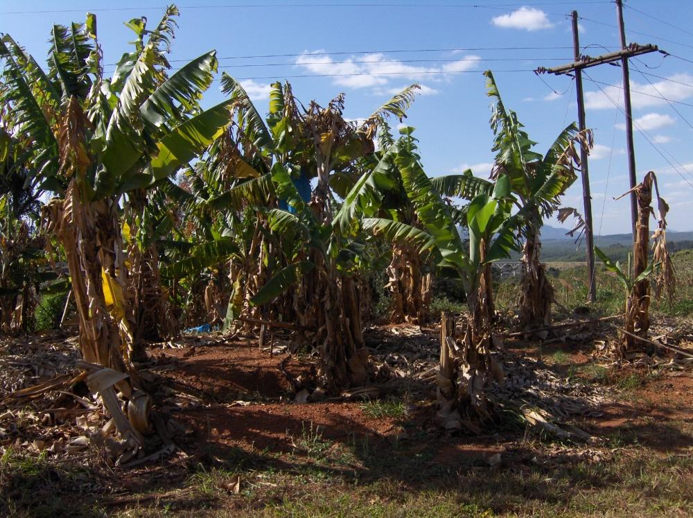 Üppige Plantage