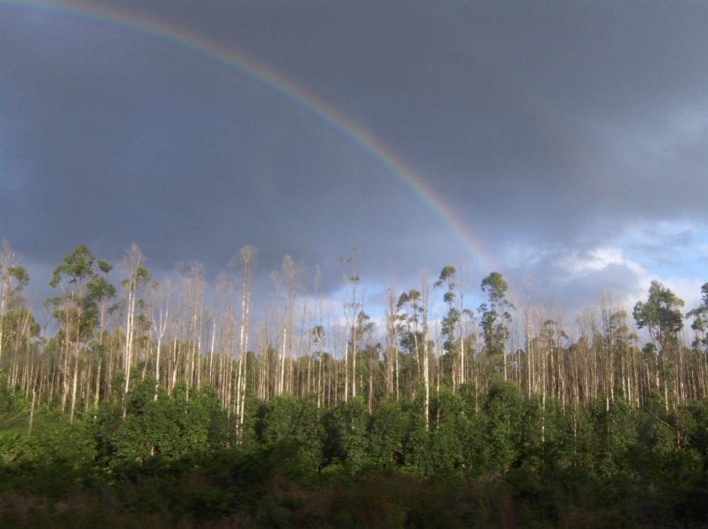 Wald und Regenbogen