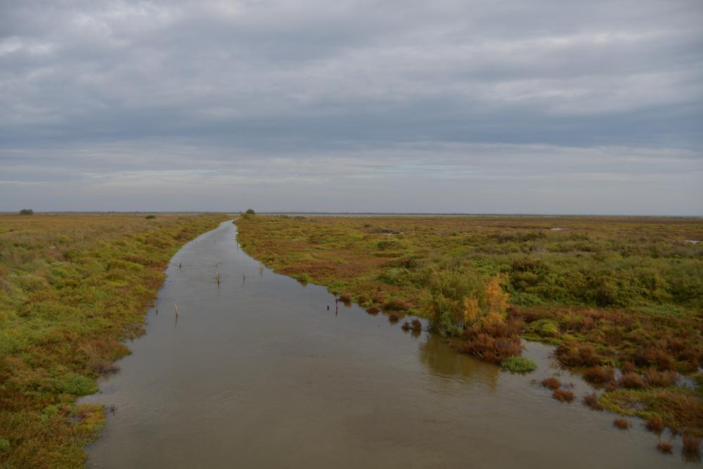 Sumpflandschaft Fluss Camarque