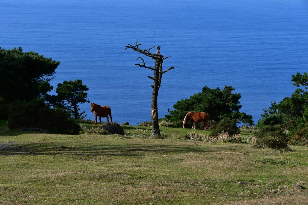 Pferde Wiese Meer toter Baum