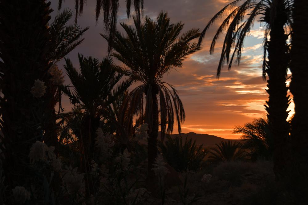 Dattelpalmen Sonnenuntergang Figuig