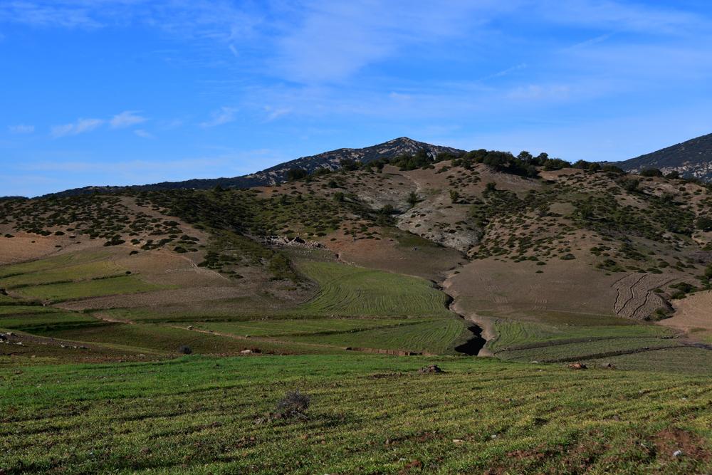 Hügel bewirtschaftetes Feld