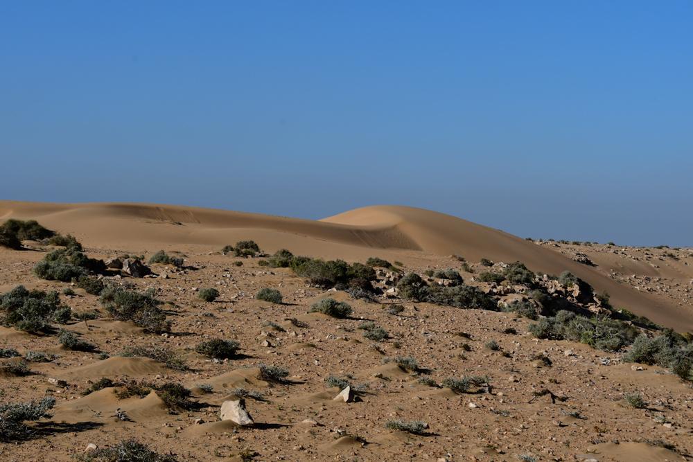 Kleine Sandduenen Plage Blanche