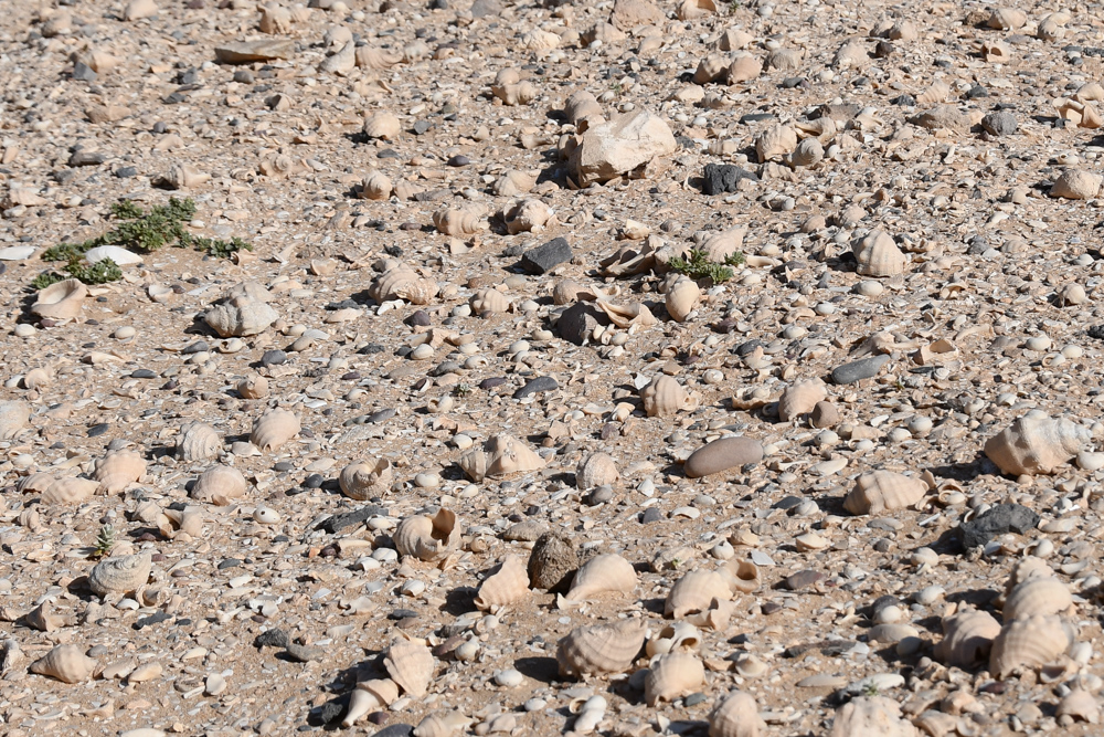 Muscheln Schneckenhaueser weisser Boden