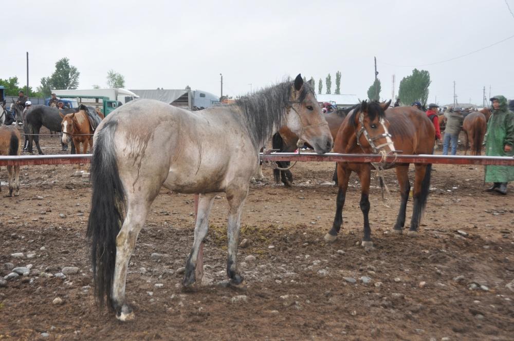 Ausgestellte Pferde auf dem Markt