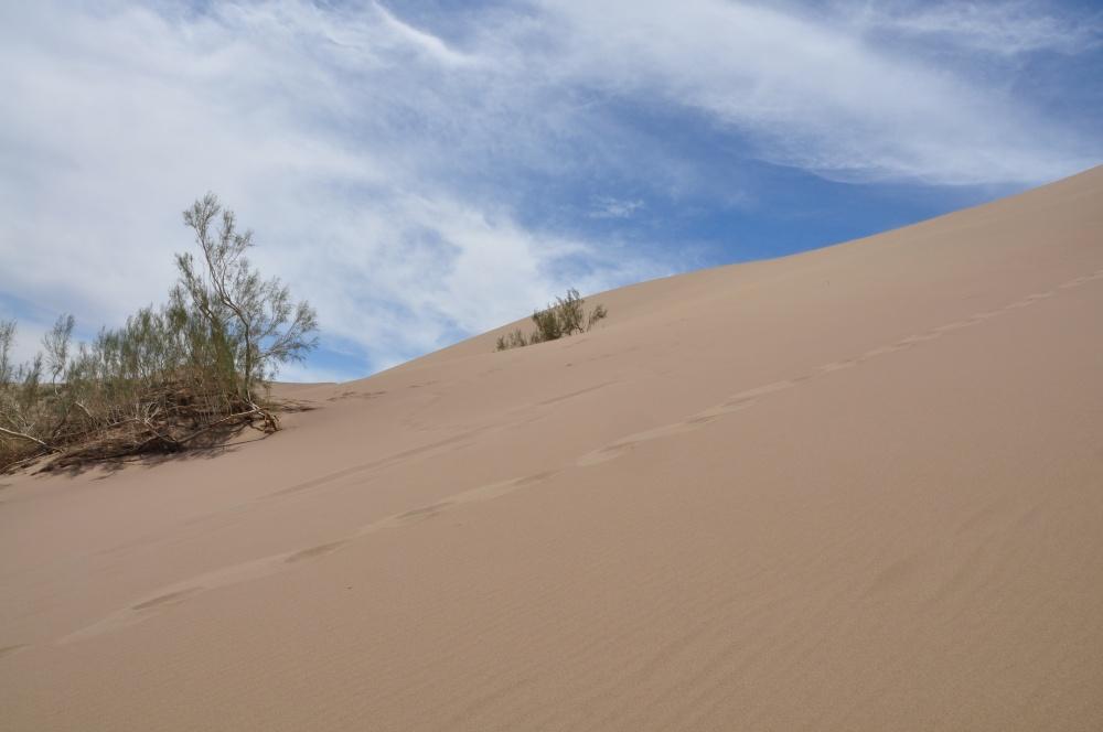 Fussspuren im Wüstensand