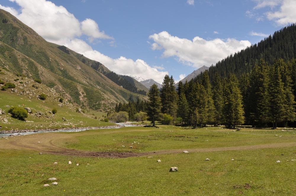 Grüne Alpenlandschaft mit Tannenwald