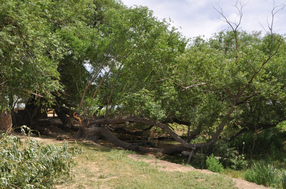 Grüner Baum in Steppe