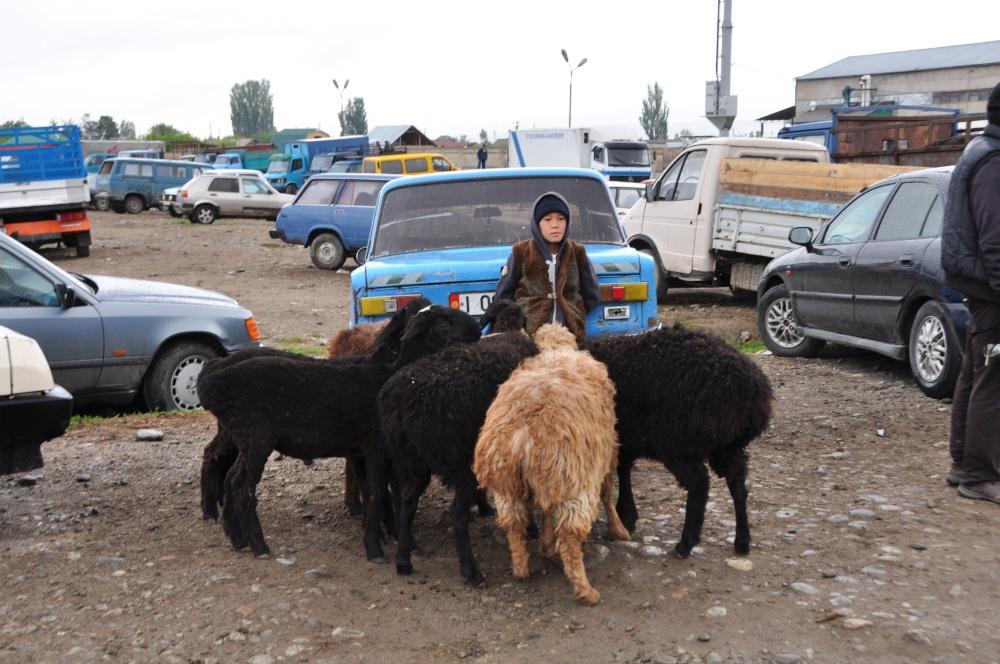 Junge auf dem Parkplatz mit Schafen