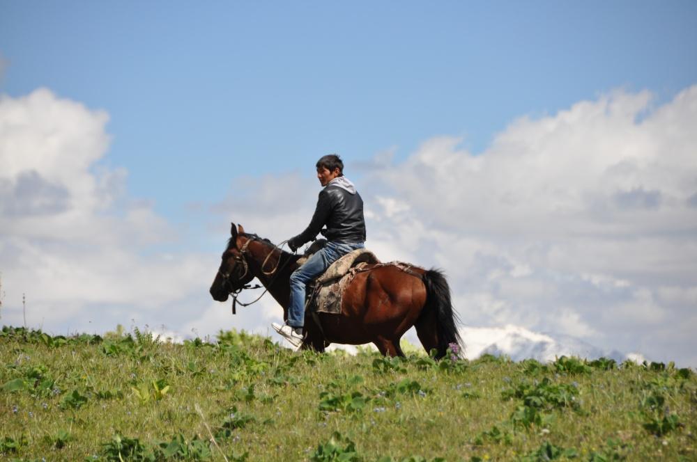 Reiter auf grüner Wiese