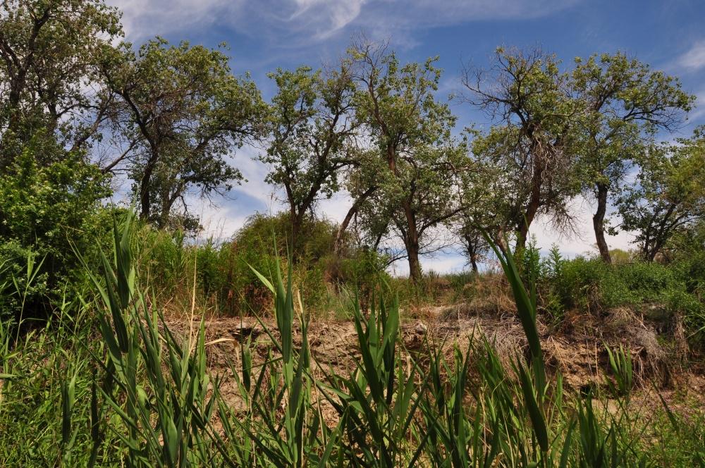Trockene Umgebung mit Bäumen