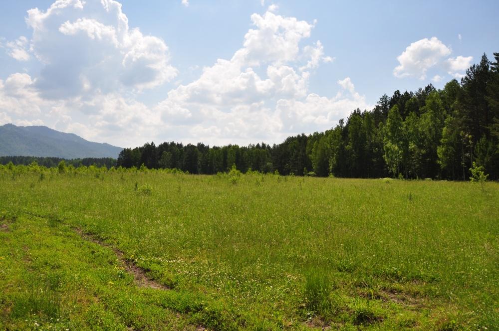 Wiese, Wald im Altai