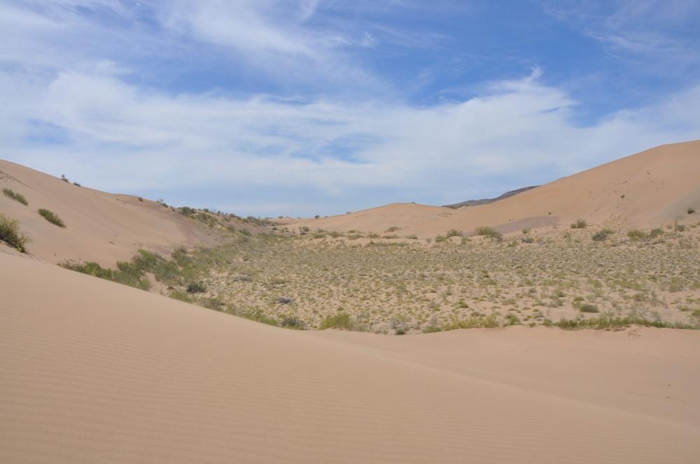 Wüste mit Grasbüschel