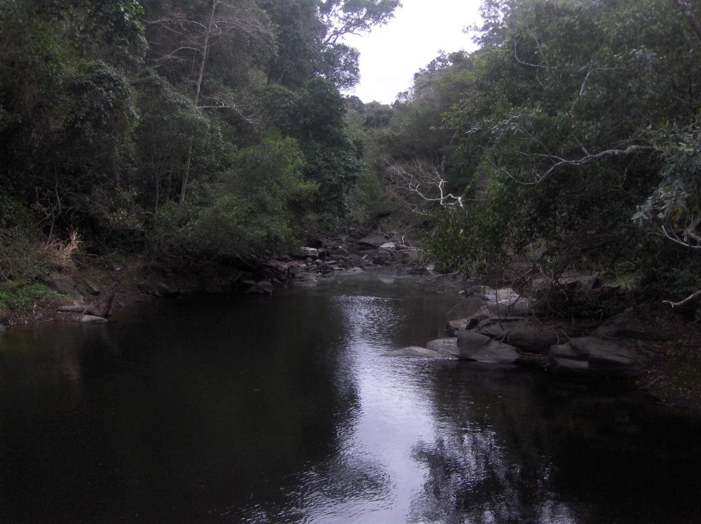 Fluss bei Port St. Johns im Wald