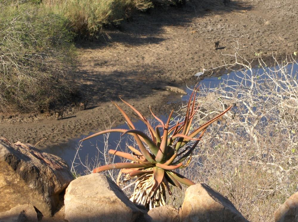 Tiere am Fluss im Küger National Park