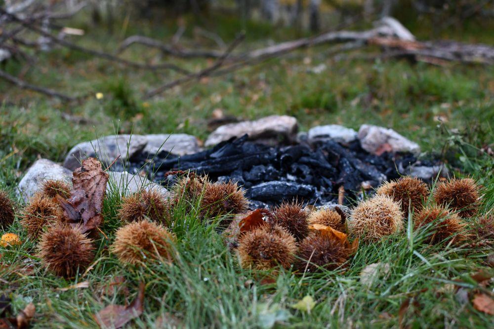 Kastanien, erloschene Feuerstelle