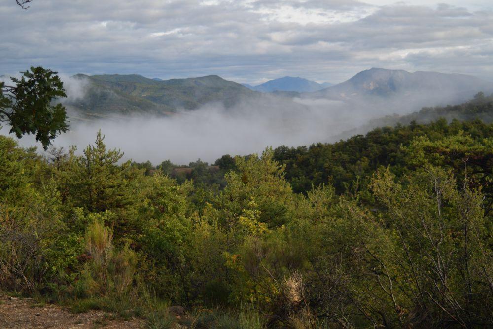 Nebel, Herbstbäume, Morgenstimmung