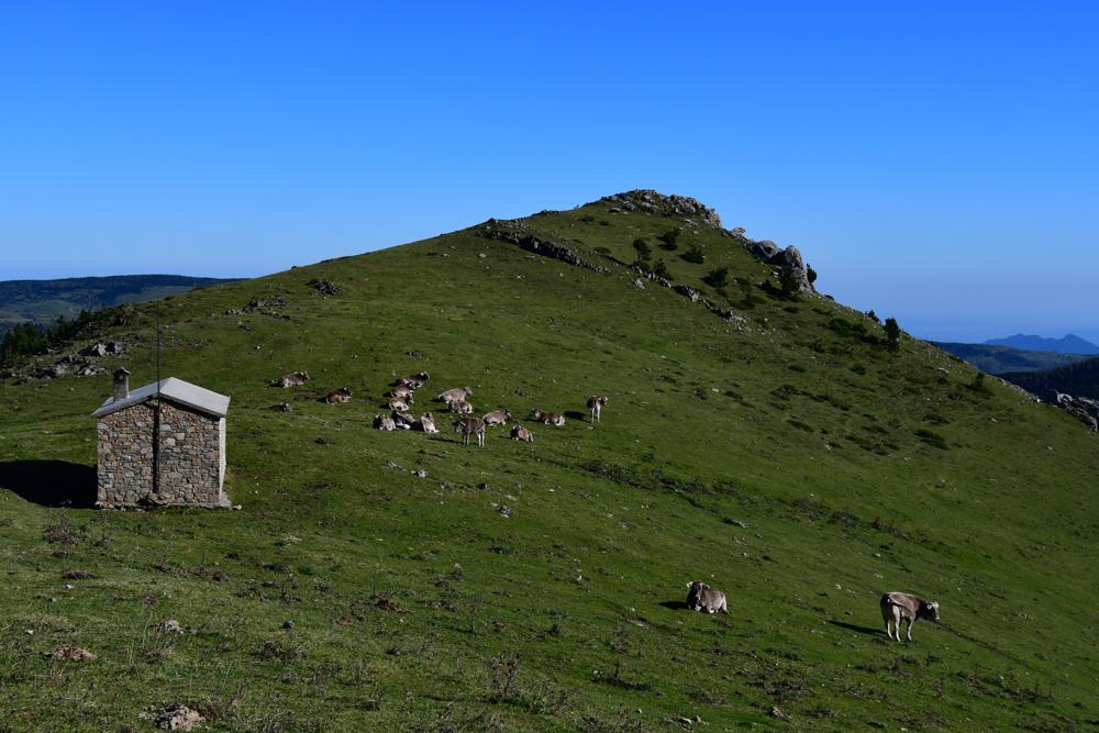 Grashügel Hütte Kühe Pyrenäen