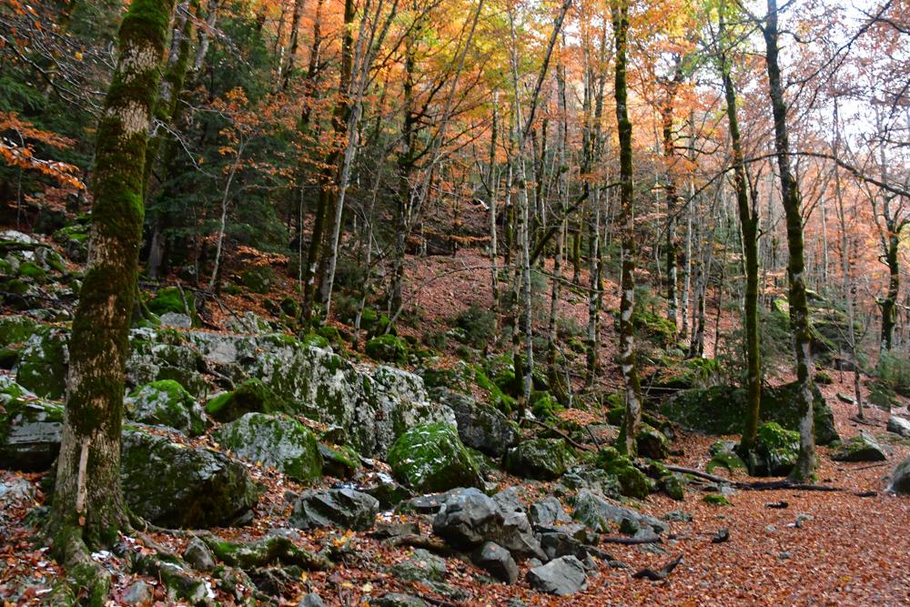 Oranger Herbstwald Blätter am Boden