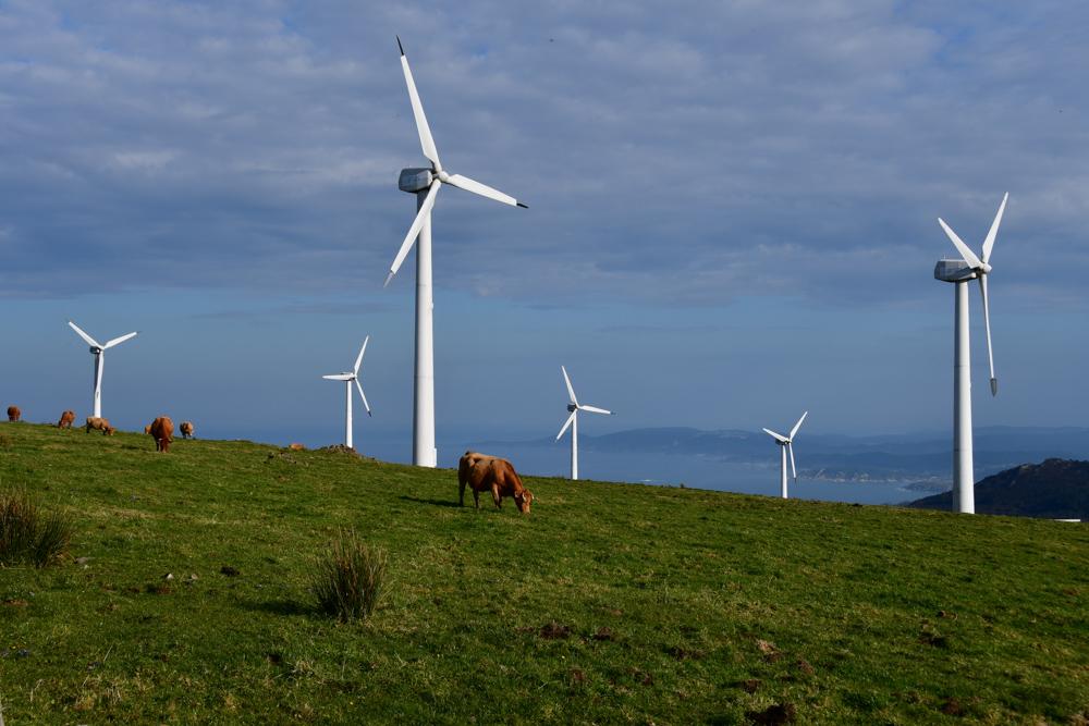Windraeder Kuehe Galicien