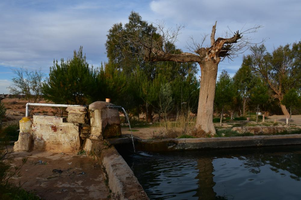 Brunnen Quelle Baum Rekkam