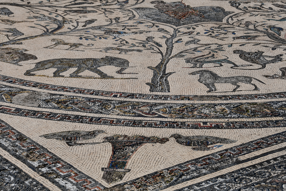 Volubilis Mosaik