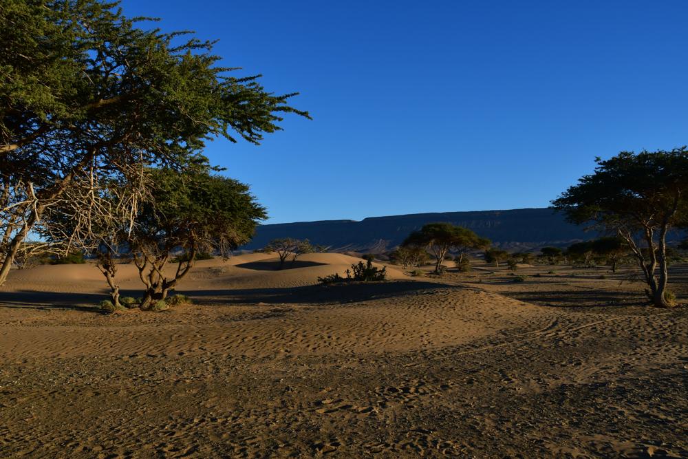 Kleine Sandduenen Akazien Oued Draa